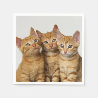 Three Cute Ginger Cat Kittens Friends Head Photo / Disposable Napkin