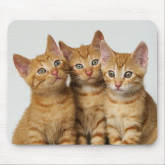 Three cute ginger kittens side by side mouse pad