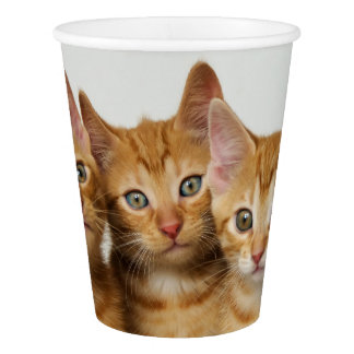 Three Cute Ginger Kittens Side by Side, Party Paper Cup