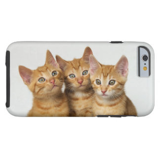 Three Cute Ginger Kittens Side by Side, protective Tough iPhone 6 Case