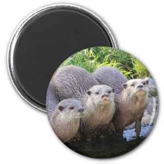 Three Cute Otters Wildlife Photography Magnet