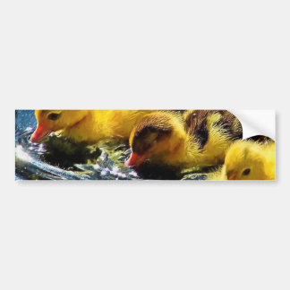 Three Cute Yellow Ducklings Greeting Cards Bumper Sticker