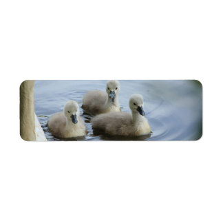 three cygnets return address label