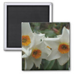 Three daffodils fridge magnets