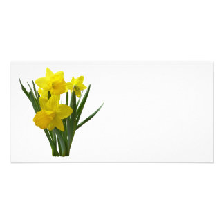 Three Daffodils Standing Guard Personalized Photo Card