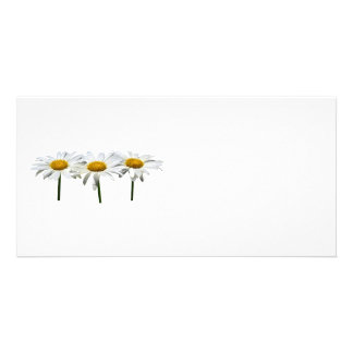 Three Daisies In a Row Picture Card