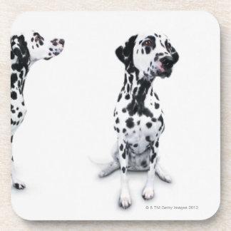 Three Dalmatians Beverage Coaster