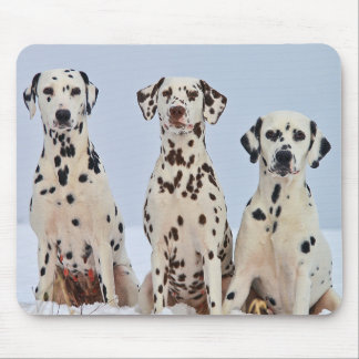 Three Dalmatians Mouse Pad