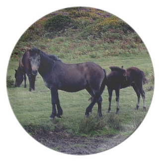Three Dartmoor Ponies Grazeing Late Summer Plate