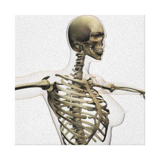 Three Dimensional View Of Female Rib Cage Canvas Print
