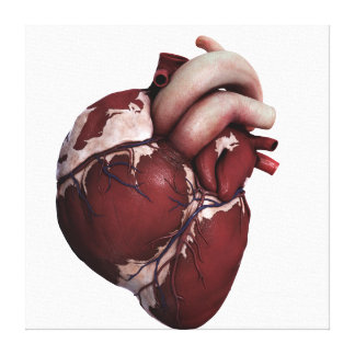 Three Dimensional View Of Human Heart, Front Canvas Print