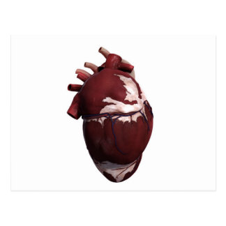 Three Dimensional View Of Human Heart, Left Side Postcard