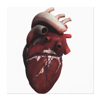 Three Dimensional View Of Human Heart, Right Canvas Print