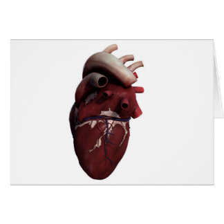 Three Dimensional View Of Human Heart, Right Card