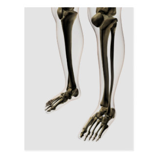 Three Dimensional View Of Human Leg And Feet Postcards