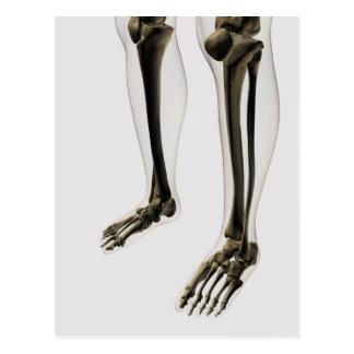 Three Dimensional View Of Human Leg And Feet Postcard