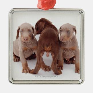 Three Doberman pinscher puppies Christmas Ornament