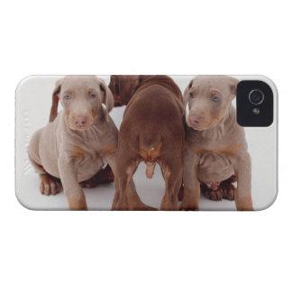 Three Doberman pinscher puppies iPhone 4 Case
