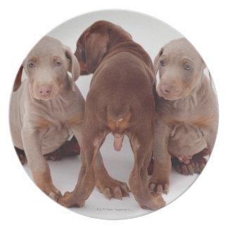 Three Doberman pinscher puppies Plate