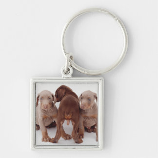 Three Doberman pinscher puppies Silver-Colored Square Key Ring