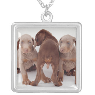 Three Doberman pinscher puppies Silver Plated Necklace
