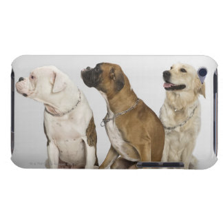 three dogs all looking to the right barely there iPod cases