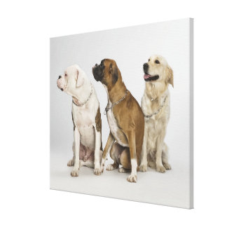 three dogs all looking to the right canvas print