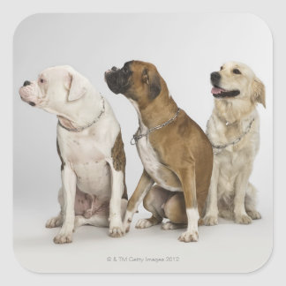 three dogs all looking to the right square sticker