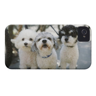 Three dogs iPhone 4 cover