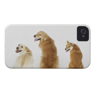 Three dogs looking at camera iPhone 4 cover