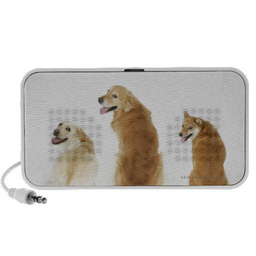 Three dogs looking at camera PC speakers