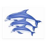 Three Dolphins Postcard