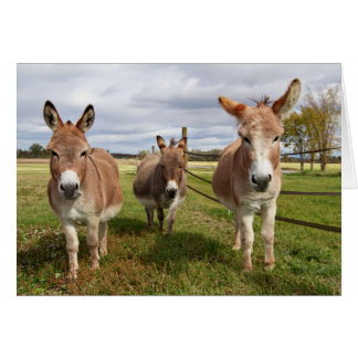 Three Donkey's Card
