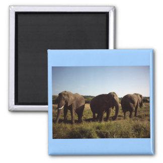 Three Elephants Square Magnet