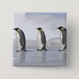 Three Emperor Penguins, Snow Hill Island 15 Cm Square Badge