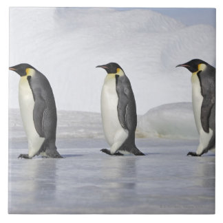 Three Emperor Penguins, Snow Hill Island Tile