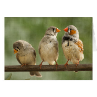 Three Finches on a Twig Card