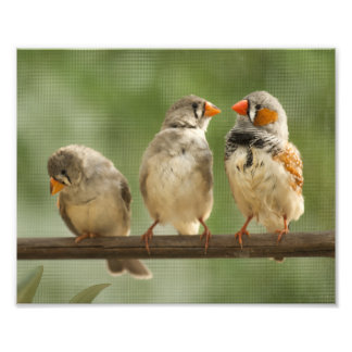 Three Finches on a Twig Photo Art