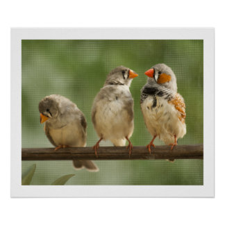 Three Finches on a Twig Poster