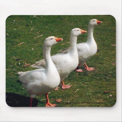Three Geese a Strutting - Mousemat. Customise. Mouse Mats