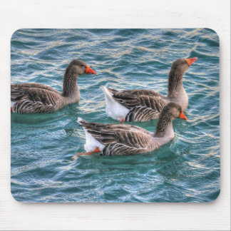 Three geese swimming in blue water mouse pad