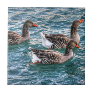 Three geese swimming in blue water ceramic tile