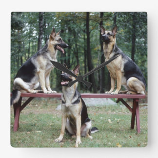 Three German Shepherds posing wall clock