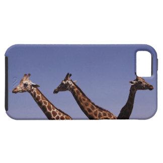Three giraffes iPhone 5 case