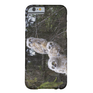 Three Great Horned Owl (Bubo Virginianus) Chicks Barely There iPhone 6 Case