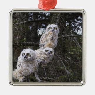 Three Great Horned Owl (Bubo Virginianus) Chicks Christmas Ornament