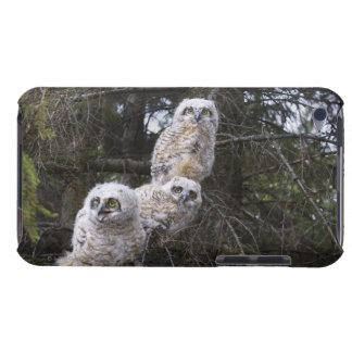 Three Great Horned Owl (Bubo Virginianus) Chicks iPod Touch Cases