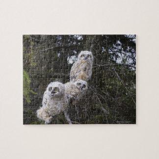 Three Great Horned Owl (Bubo Virginianus) Chicks Jigsaw Puzzle