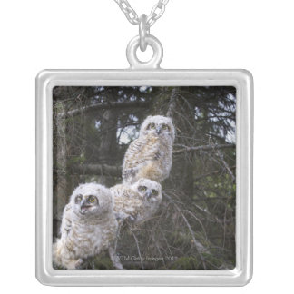 Three Great Horned Owl (Bubo Virginianus) Chicks Silver Plated Necklace