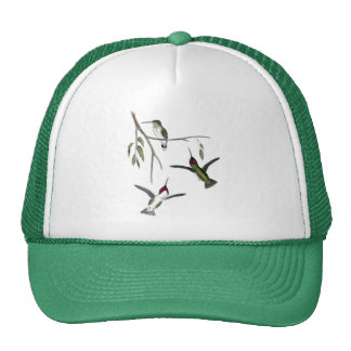 Three Green Hummingbirds Hats